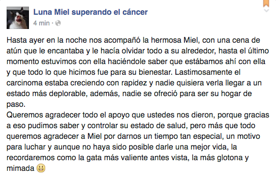 luna-miel-gata-cancer