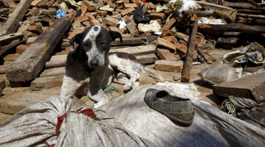 terremoto-sismo-temblor-ecuador-mexico-chile-china-animal-la-revista-mascotas-nepal-proteccion-animal-mundial-ok