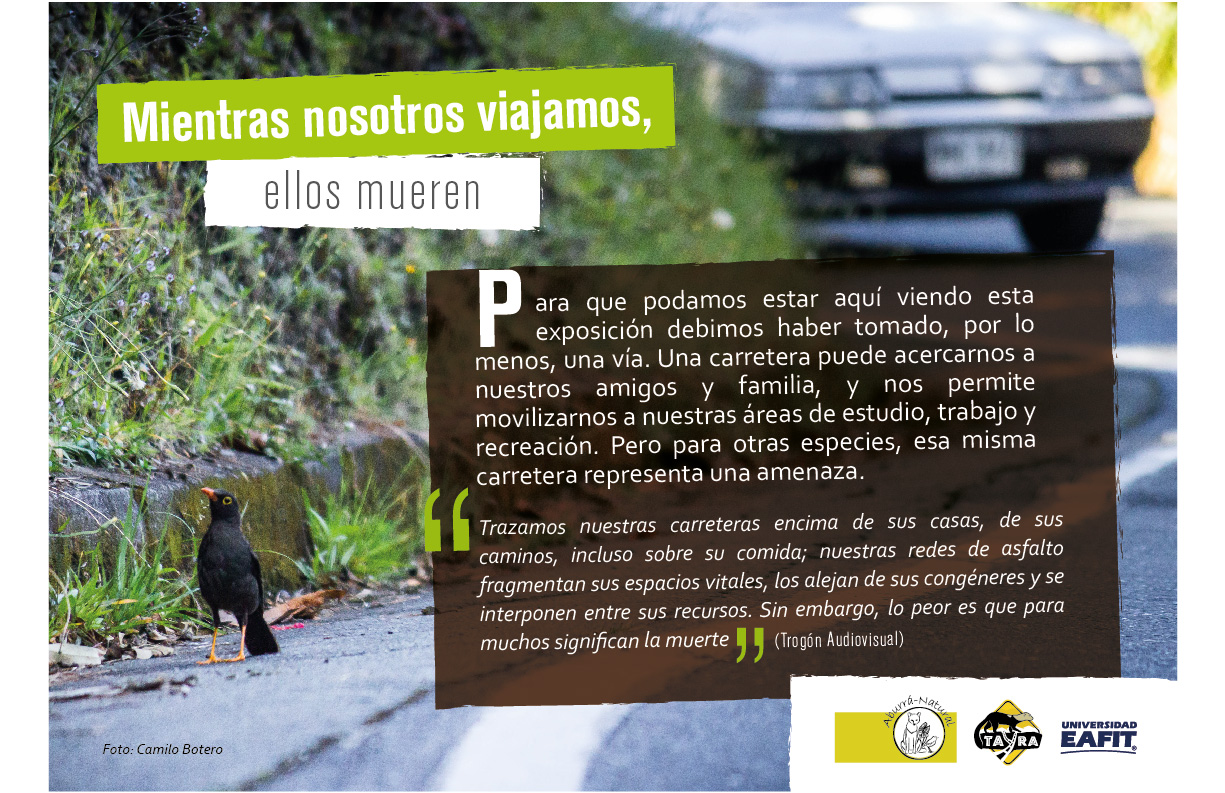 tayra-atropellamientos-animal-la-revista-fauna-amenazada-valle-de-aburra-natural