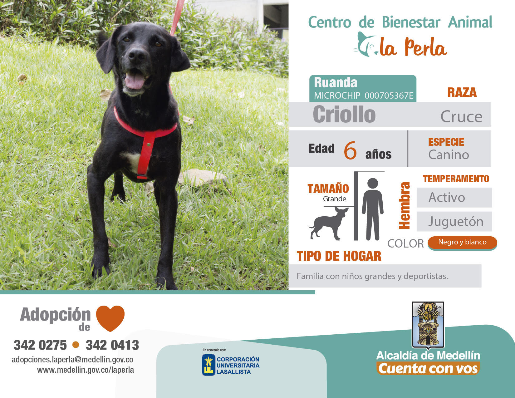 adopciones-animal-la-revista-la-perla