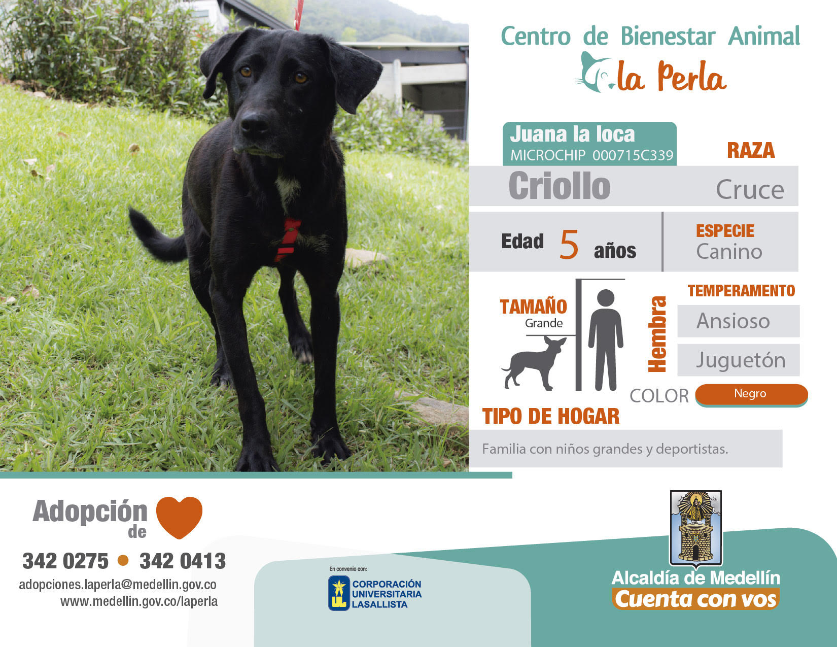 adopciones-la-perla-animal-la-revista