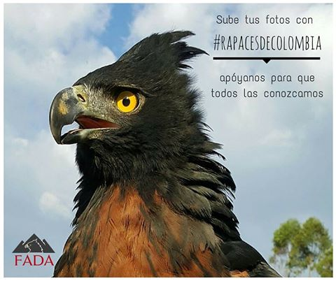 campana-aves-rapaces-de-colombia-animal-la-revista